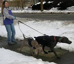 Images--pulling leash